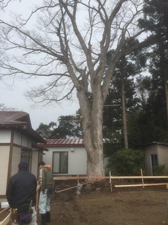 三種町 ~ 木かげの平屋